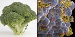 BROCCOLI – CANCER